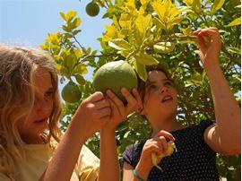 Изображение Фотография детей на ферме Эшба