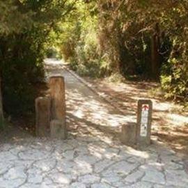 Ramot Menashe, Forest, Cycling, אופניים, יער, רמות מנשה - רמות מנשה, אופניים, יער
