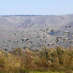 Birding, Jerusalem