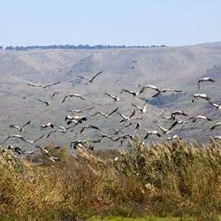 Birdwatching site - אתר הצפרות