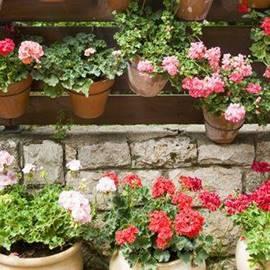Flowers in Ein Hod - פרחים בעין הוד