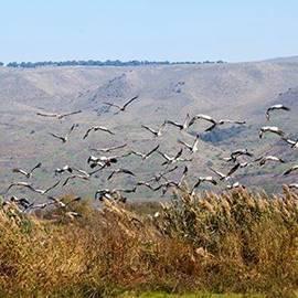 The Hula Valley - עמק החולה