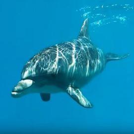 Picture of Le récif des dauphins d'Eilat