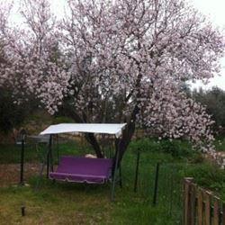 צימר בלטרון - נדנדה בגינה - Zimmer at Latrun - Swing in the yard