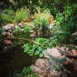 טבע - גן בוטני - Nature - Botanical Garden