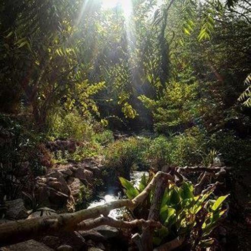 טבע שמש ברקע - Nature sun in the background