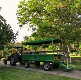 הגן הבוטני-עין גדי  - Botanic Garden - Ein Gedi