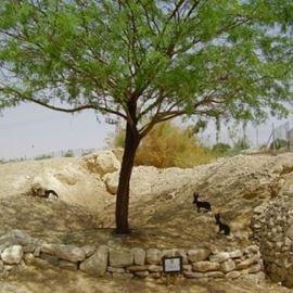 פארק ספיר בערבה - Sapir in arava Park