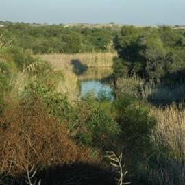 בריכה טבעית בשמורת חולות ניצנים - Natural Pool at Holot Nitzanim Reserve