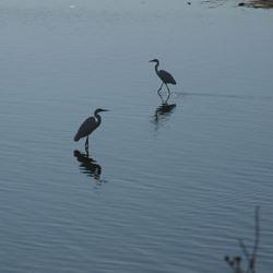 ציפור נודדות על המים - Bird wandering on the water