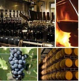 יקב ברקן - Barkan Winery