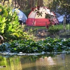 אוהלים בנביעות ארנון