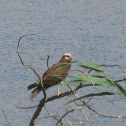 ציפור באגם ירוחם - A bird in Lake Yeruham