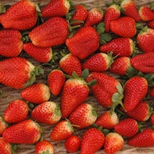 תות שדה - Strawberry