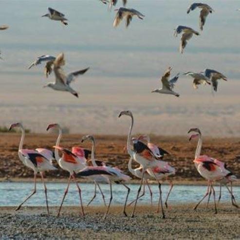 ציפורים בעמק - Birds in the Valley