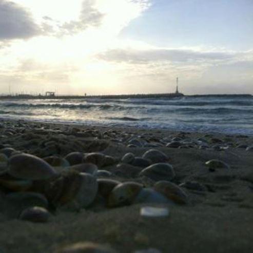 צדפות בחוף הים - Clams on the beach