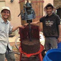 שני עובדים ביקב - Two workers in the winery