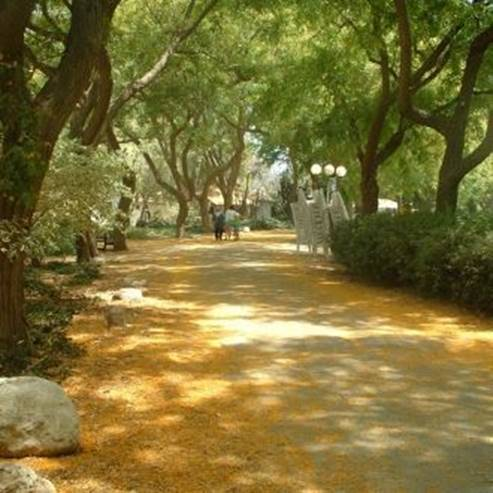 שביל בגן - Path in the garden