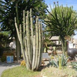 גן הקקטוסים בחולון - The Cactus Garden in Holon