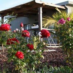 פרחים בחצר הצימר - Flowers in the Zimmer yard