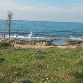 חוף שקמונה - Shikmona Beach