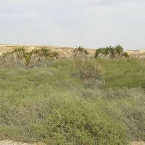 עין עקרבים מרחוק - Ein Akrabim from far