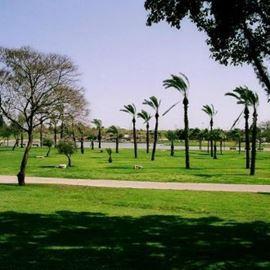 הפארק - The Park