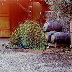 חצר היקב - Courtyard of Winery