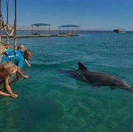 ילדים משחקים עם דולפינים - Children playing with dolphins