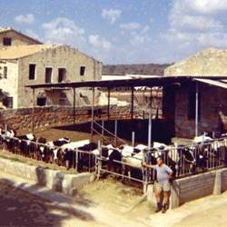 cowshed - רפת