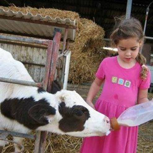 ליאור מניקה עגל חמוד -  Lior is nursing a cute calf