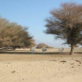 בעלי חיים בעין יטבתה - Animals in Ein Yotvata