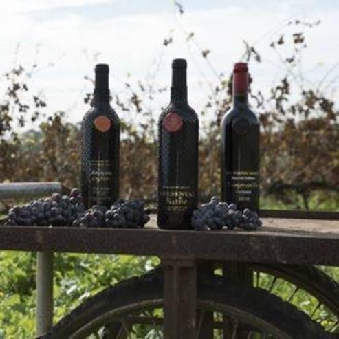 בקבוקי יין וענבים ביקב  - Wine bottles and grapes in the winery