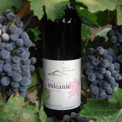 בקבוק יין מרלו - Bottle of merlot wine