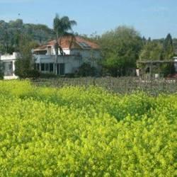 The winery yard - חצר היקב