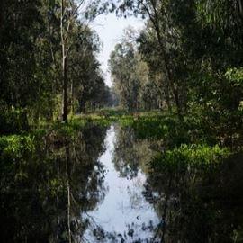 יער חדרה - Hadera Forest