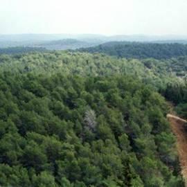 יער עופר - Ofer Forest