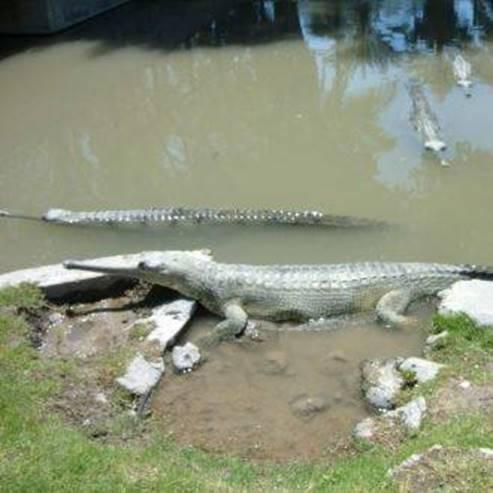 Crocoloco - Crocodile Farm - קרוקולוקו חוות תנינים