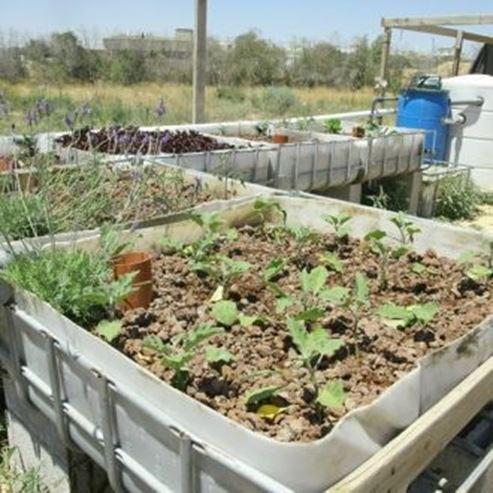 חקלאות אורגנית - Organic agriculture