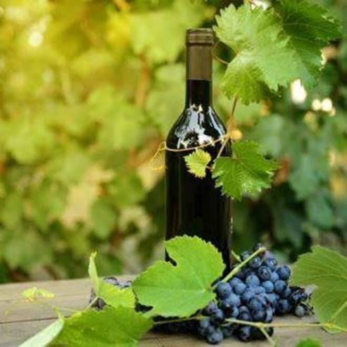 כרמים ובקבוק יין ביקב - Vineyards and a bottle of wine in the winery