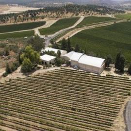 יקב גלו דה גת - Clos De Gat Winery