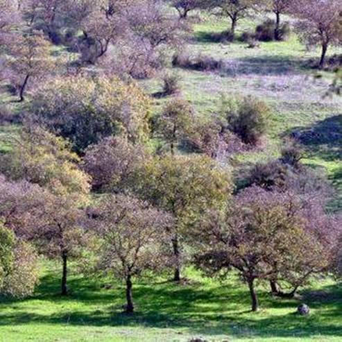 יער בית קשת - Beit Keshet Forest