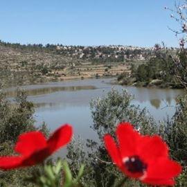 עמק מוצא - Motza Valley