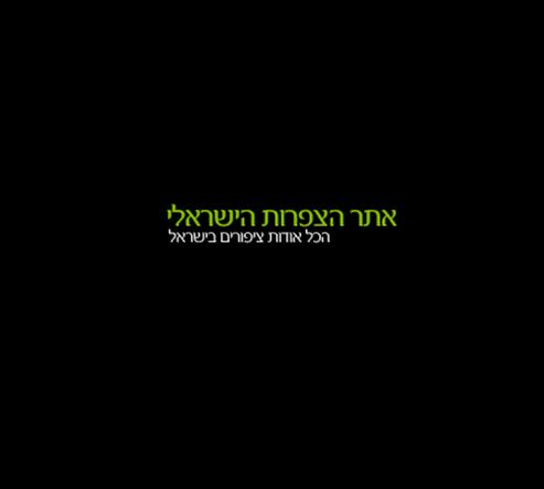 אתר הצפרות הישראלי - Israeli Birdwatching Site