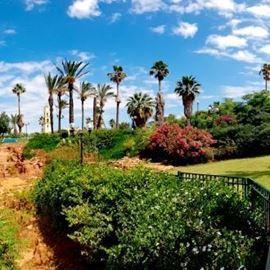 נוף של עצים וצמחייה במהלך הסיור - View of trees and vegetation during the tour