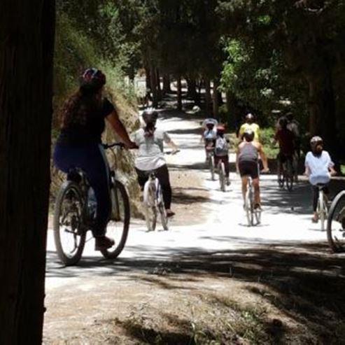 רוכבי אופניים ביער - Cyclists in the forest