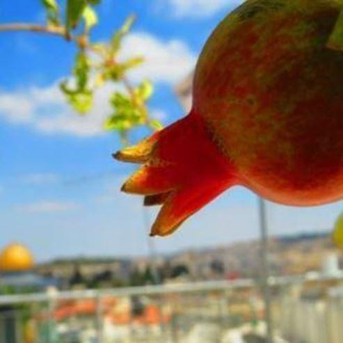 רימון  - Pomegranate