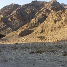 Изображение Maratonul Eilat sau cum să alergi prin deșert