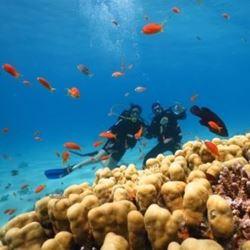 צלילה - Diving