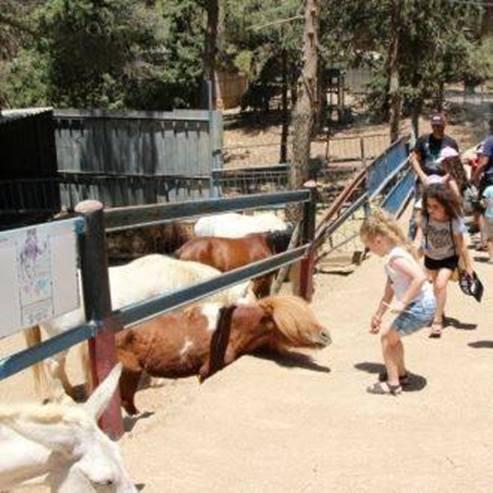 סוסים בחווה - Horses on the Farm